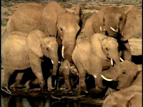 vídeos y material grabado en eventos de stock de ms, pan, composite, herd of african elephant (loxodonta africana) at waterhole, tsavo national park, kenya - grupo mediano de animales