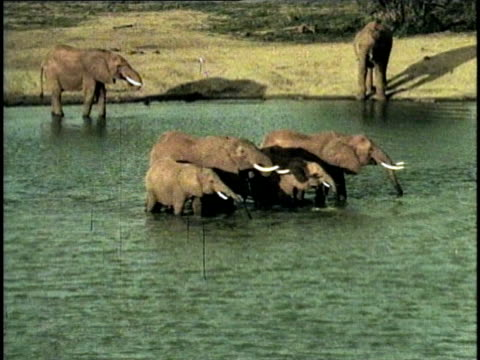 WS, HA, Herd of African Elephant (Loxodonta africana) at waterhole, Tsavo National Park, Kenya