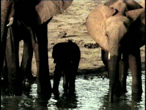 MS, COMPOSITE, Herd of African Elephant (Loxodonta africana) at waterhole, Tsavo National Park, Kenya