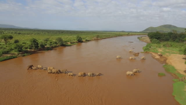 stockvideo's en b-roll-footage met herd of african elephants crossing a river - grote groep dieren