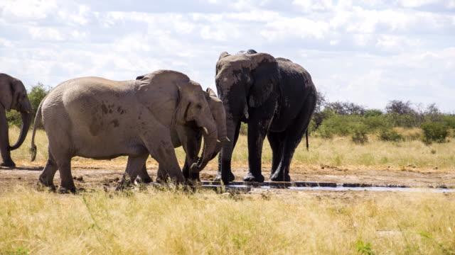 LS Herd Of African Elephants