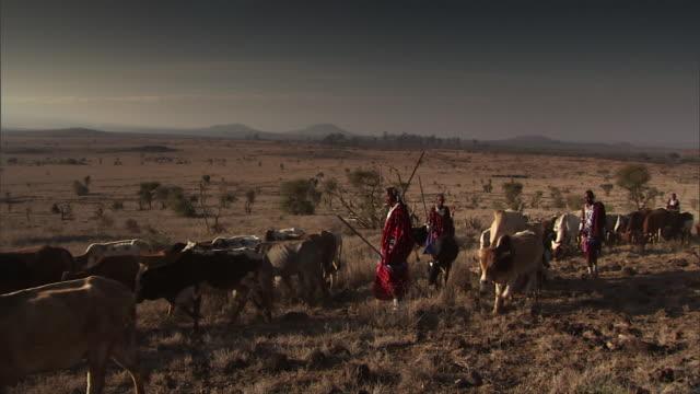 MS PAN Herd of African Masai tribesmen emaciated cattle over dry landscape / Masai Mara, Tanzania