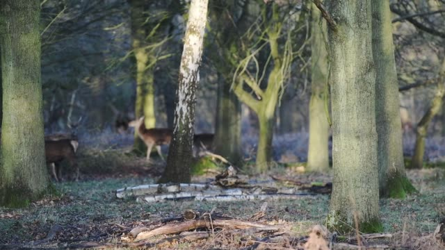 a herd of beautiful deer in richmond park in london, england - low angle view - hooved animal stock videos & royalty-free footage