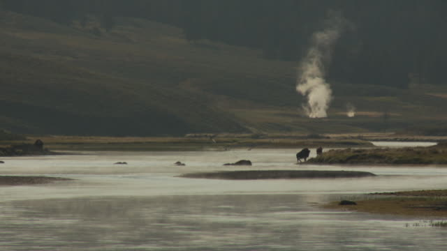 A herd of bison crosses the Yellowstone River in Yellowstone National Park's Hayden Valley.