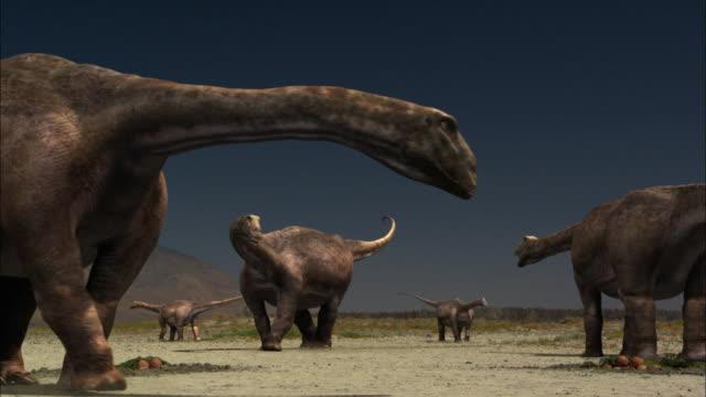 a herd of brontosaurus circle around a nest. - animal nest stock videos & royalty-free footage