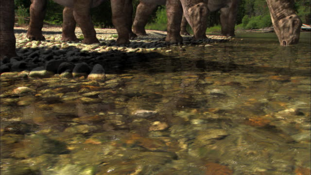 a herd of brontosauruses drinks from a stream. - extinct stock videos & royalty-free footage