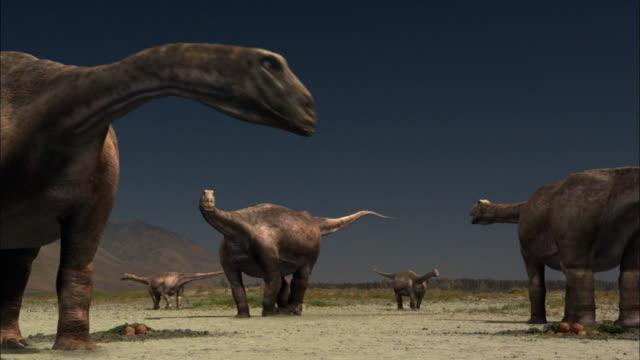 stockvideo's en b-roll-footage met cgi, ms, herd of brontosauruses gathering around their eggs - jura mesozoïcum