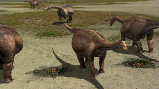 cgi, ms, ha, herd of brontosauruses gathering around their eggs - paleozoology stock videos and b-roll footage