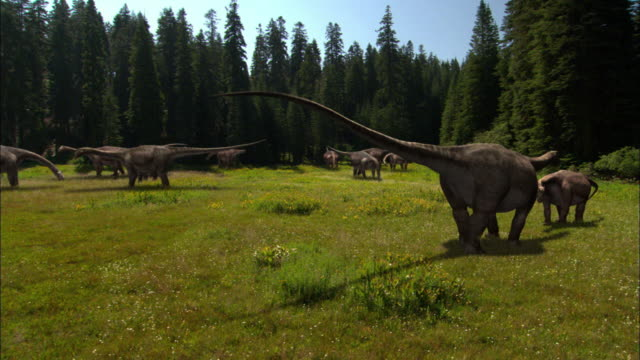 CGI, WS, DS, Herd of Brontosauruses in field