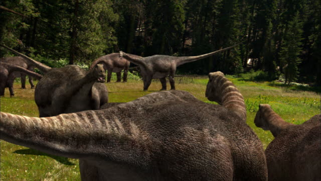 cgi, ms, herd of brontosauruses in field - erbivoro video stock e b–roll