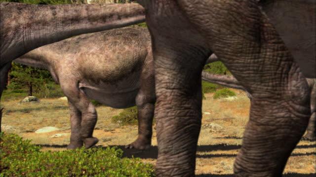 CGI, CU, Herd of Brontosauruses walking in field