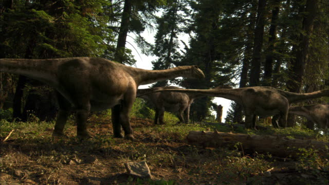 cgi, ms, pan, herd of brontosauruses walking through forest - paleozoology stock videos and b-roll footage