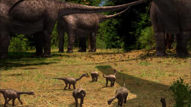 CGI, CU, Herd of Brontosauruses with babies in field