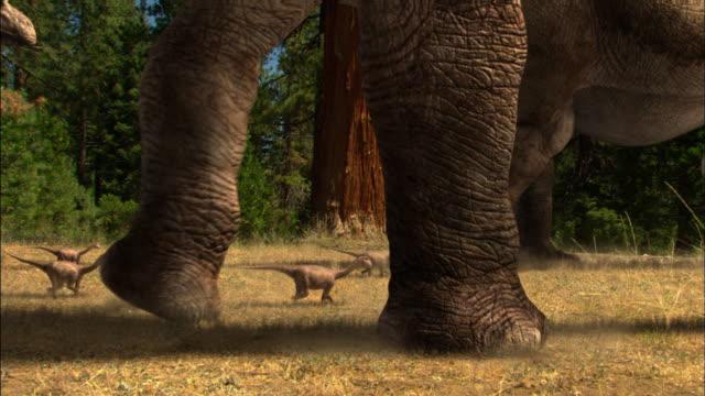 CGI, CU, Herd of Brontosauruses with babies walking in field