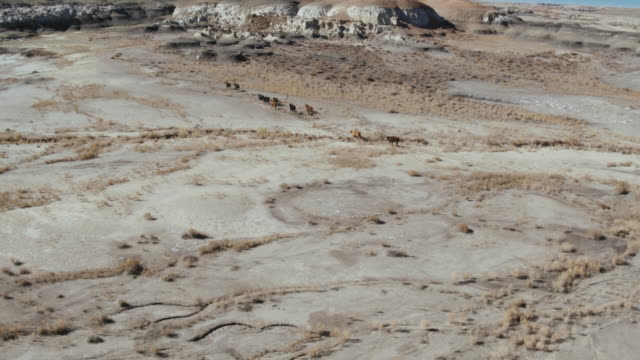 herd of cattle, bisti badlands, new mexico, united states - bisti badlands stock videos & royalty-free footage