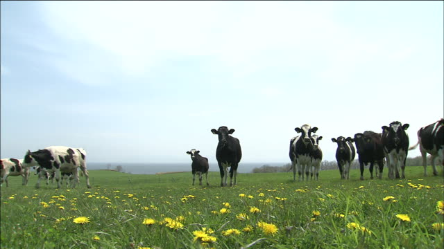 a herd of cattle: tilt up - pasture stock-videos und b-roll-filmmaterial