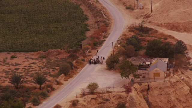A herd of cattle walks along the road with their shepherds in Jericho - Seen from Above
