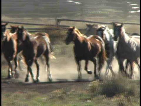 cu, pan, herd of charging horses, wyoming, usa - medium group of animals stock videos & royalty-free footage
