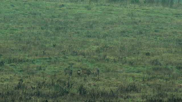 herd of deer in the meadow - uncultivated stock videos & royalty-free footage