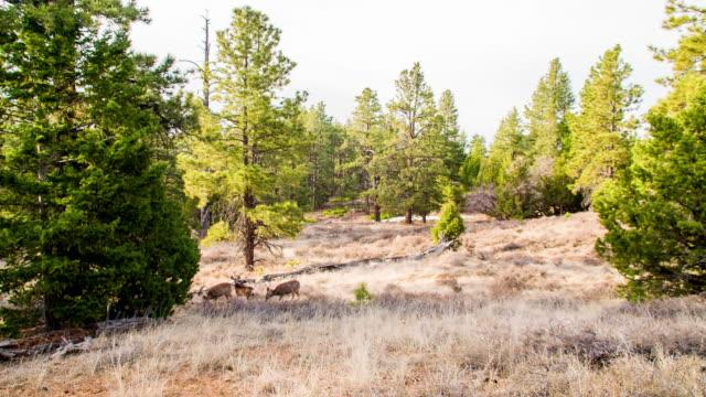 ls herd of deer in woods - medium group of animals stock videos & royalty-free footage