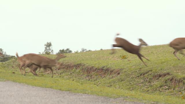 herd of deer running in environmental conservation under raining day - wildlife conservation stock videos & royalty-free footage
