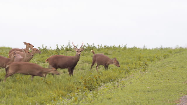 herd of deer walking together in environmental conservation under raining day - wildlife conservation stock videos & royalty-free footage