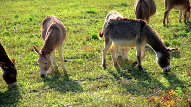 Herd of donkeys on the meadow