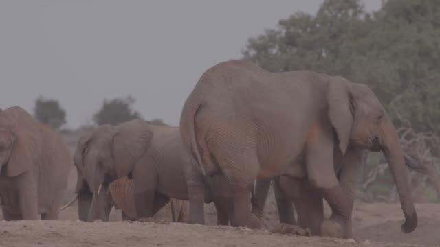 stockvideo's en b-roll-footage met herd of elephants / africa - plate met stilstaande achtergrond