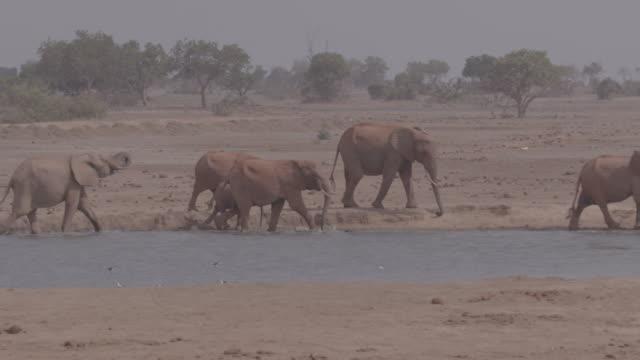 herd of elephants / africa - 草食性点の映像素材/bロール