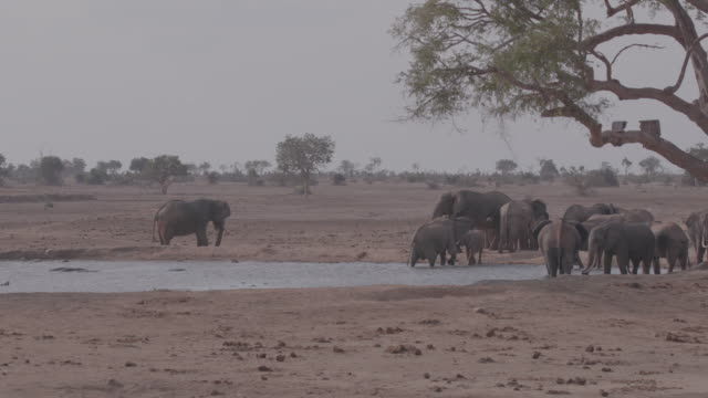 herd of elephants / africa - named wilderness area stock videos & royalty-free footage