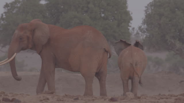 vídeos de stock, filmes e b-roll de herd of elephants / africa - parte do corpo animal