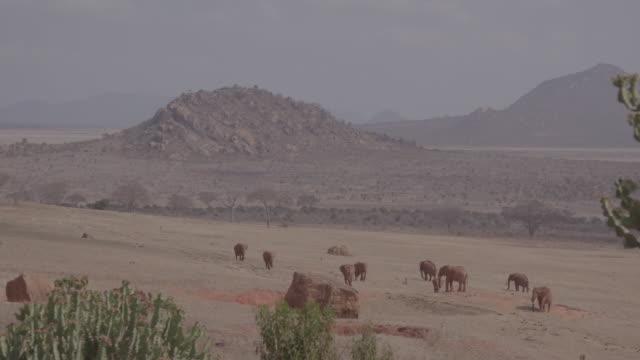 vidéos et rushes de herd of elephants / kenya, africa - plaque de montage fixe