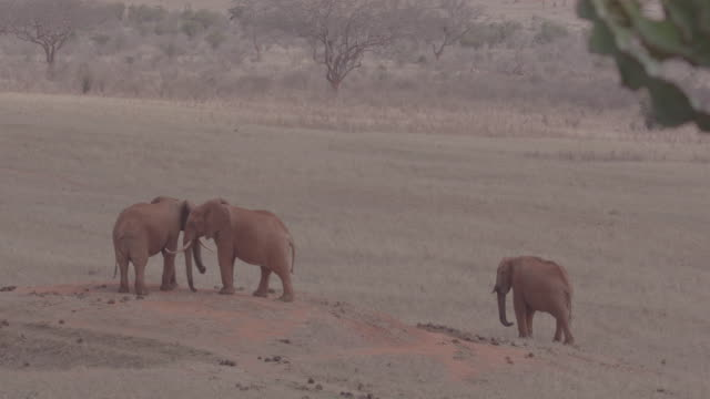 herd of elephants / kenya, africa - physical geography stock videos & royalty-free footage