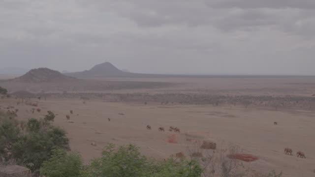 herd of elephants / kenya, africa - hill stock videos & royalty-free footage