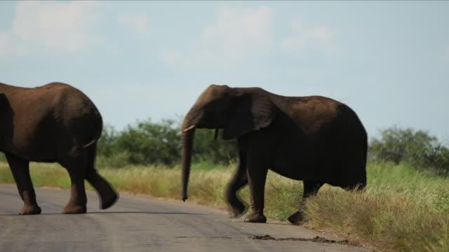 herd of elephants on safari - elephant stock videos & royalty-free footage