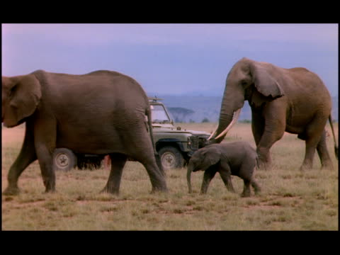a herd of elephants passes a jeep. - zoologia video stock e b–roll