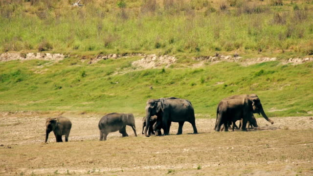 a herd of elephants taking mud bath - elephant stock videos & royalty-free footage