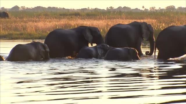 vidéos et rushes de herd of elephants - éléphanteau