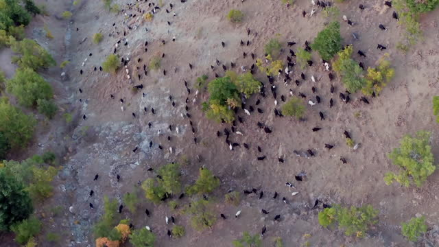 herd of goats in taurus mountains, turkey - middle east stock videos & royalty-free footage