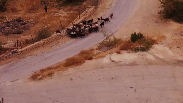 a herd of goats is following a shephard boy  - seen from above - shepherd stock videos & royalty-free footage
