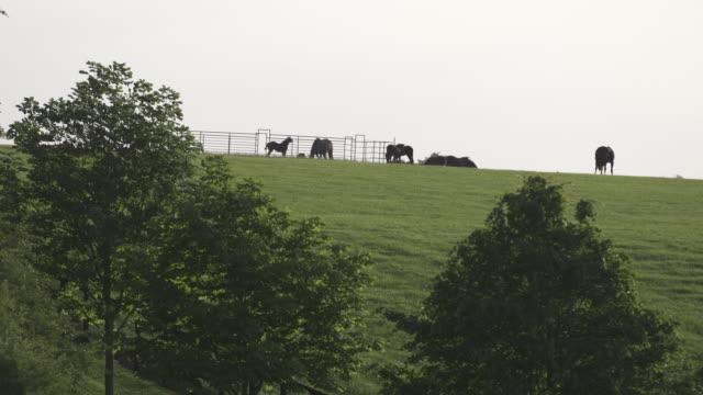 vídeos y material grabado en eventos de stock de herd of horses in distance - animales de trabajo