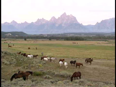 ws, ha, herd of horses in field at teton mountains, grand teton national park, wyoming, usa - parco nazionale del grand teton video stock e b–roll