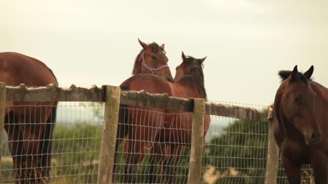 Herd of horses in field