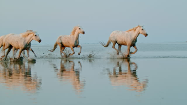 slo mo herd of horses running on the beach - running stock videos & royalty-free footage