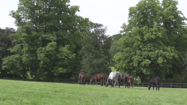 vídeos y material grabado en eventos de stock de herd of horses - animales de trabajo