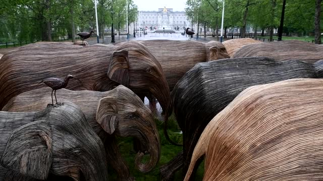 herd of life-size elephant statues on the mall in central london, created by the elephant family trust as part of their 'coexistence' campaign to... - 厚皮動物点の映像素材/bロール