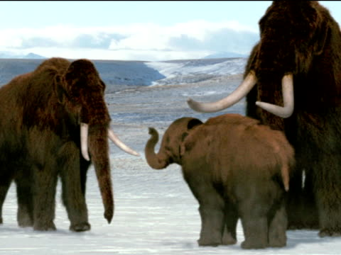 Herd of mammoths care for baby, North America