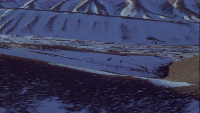 a herd of mongolian gazelles runs over snow-covered sand dunes. available in hd. - duna video stock e b–roll