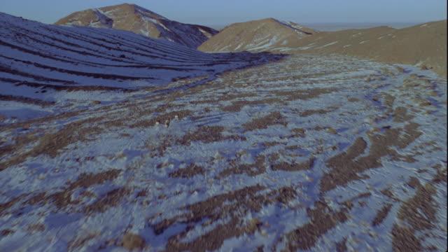 vidéos et rushes de a herd of mongolian gazelles runs over snow-covered sand dunes. available in hd. - désert de gobi