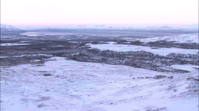 herd of reindeer run over snowy hills abisko sweden - herde stock-videos und b-roll-filmmaterial